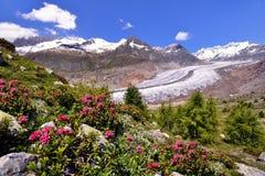 Great glacier of Aletsch in Switzerland. Great glacier of Aletsch is part of UNESCO World Heritage stock photo
