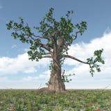 Great gnarled tree Royalty Free Stock Photo