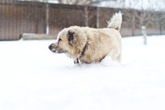Big guard dog Stock Photo