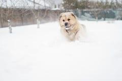 Big guard dog Stock Photography