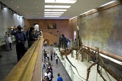 Great Hall of the Museum of Paleontology. Royalty Free Stock Images