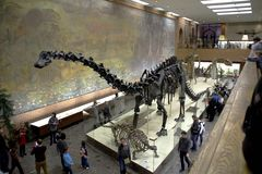 Great Hall of Paleontology Museum in Moscow. Stock Images