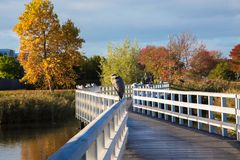 The great heron sits on the railing of the bridge. royalty free stock photos