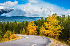Great Highway is among forests yellowed. Canadian Rockies in beautiful September day. Great Highway is among the mountains and forests yellowed Stock Photos