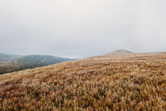 Great hills at frozen morning on fog at Carpathian mountains Stock Photography