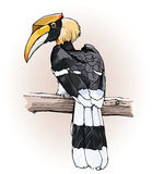 Great hornbill Royalty Free Stock Photography