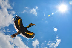 Great hornbill flying. Great Hornbill (Buceros bicornis) flying with blue sky and sun background Stock Photo