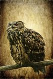 Great Horned Owl on Antique Texture Stock Photo