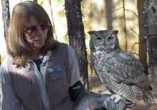 A Great Horned Owl at Bearizona, Williams, Arizona Royalty Free Stock Photography