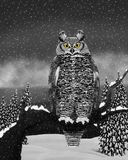 Great Horned Owl (Bubo virginianus) Royalty Free Stock Image