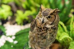 Great horned owl at garden Stock Photos