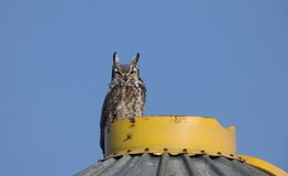 Great Horned Owl on Granary Royalty Free Stock Photo