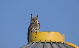 Great Horned Owl on Granary. Saskatchewan Royalty Free Stock Photo