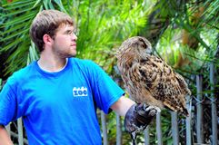 Great horned owl in hand of zoo keeper. Great horned owl standing the same way as the zoo intern royalty free stock photography