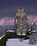 Great Horned Owl in Winter (Bubo virginianus) Royalty Free Stock Photography