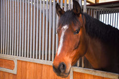 Great horse Royalty Free Stock Photography