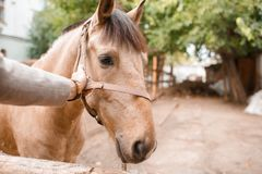 A great horse on the farm outdoor on a blurred background. royalty free stock images
