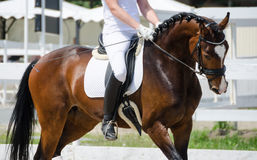 Great horse. A great horse to compete in dressage Stock Photography