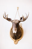 Great hunting trophy on the wall Royalty Free Stock Photos