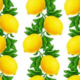 Great illustration of beautiful yellow lemon fruits on a branch with green leaves isolated on white background. Seamless pattern. Great illustration of beautiful royalty free illustration