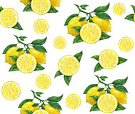 Great illustration of beautiful yellow lemon fruits  on white background. Water color drawing of lemon. Seamless pattern Stock Photos