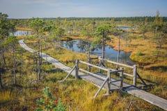 Great Kemeri Bog Boardwalk, Kemeri National Park, Latvia. royalty free stock images