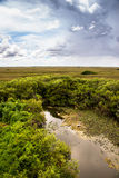Great landscape at Everglades National Park. In Summer when the rain is coming Royalty Free Stock Images