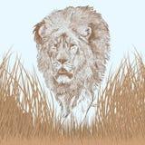 Great lion portrait Stock Photo