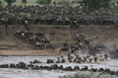 The Great Migration Stock Image