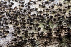 The great migration of ants colony on the forest floor royalty free stock image