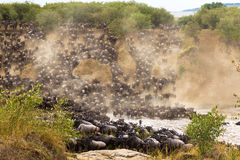 The great migration at the height. Africa. Kenya Stock Photo