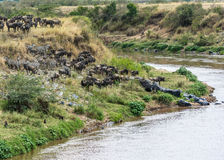 Great Migration Royalty Free Stock Photo