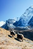 Himalayas. Great mountain views of Himalayas in Nepal trekking on the way to Everest base camp Royalty Free Stock Image