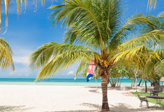 Great natural amazing  view of Cuban Cayo Coco island beach with pretty fluffy palm tree in foreground Royalty Free Stock Photography