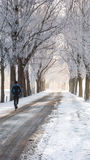 Great nice cozy winter landscape in the Netherlands Royalty Free Stock Images
