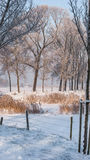 Great nice cozy winter landscape in the Netherlands Royalty Free Stock Photos