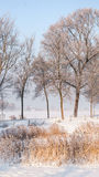 Great nice cozy winter landscape in the Netherlands Stock Photography