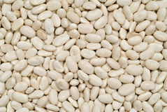 Great Northern Beans Royalty Free Stock Image