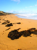 Great Ocean Road Beach - Australia Royalty Free Stock Photography