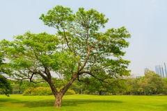 Great old Oak tree in Harsh daylight Stock Photos