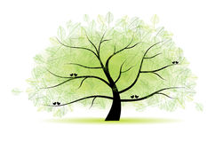 Great old tree for your design Stock Photography