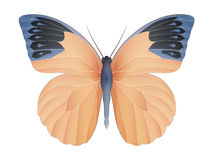 Great orange tip butterfly isolated on a white Royalty Free Stock Images