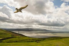 Great Orme, Wales. Stock Photography
