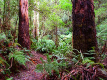 Great Otway National Park Australia Stock Photo