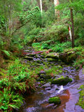 Great Otway National Park Stock Images