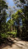 Great Otway National Park. Otway fly tree top walk. Walk among the tops of trees in the Australian forest, near the town of Apollo Bay which is located on the royalty free stock image