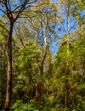 Great Otway National Park. Otway fly tree top walk. Walk among the tops of trees in the Australian forest, near the town of Apollo Bay which is located on the royalty free stock photo