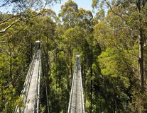 Great Otway National Park. Otway fly tree top walk. Walk among the tops of trees in the Australian forest, near the town of Apollo Bay which is located on the stock photo