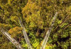 Great Otway National Park. Otway fly tree top walk. Walk among the tops of trees in the Australian forest, near the town of Apollo Bay which is located on the stock photos