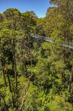 Great Otway National Park. Otway fly tree top walk. Walk among the tops of trees in the Australian forest, near the town of Apollo Bay which is located on the stock images